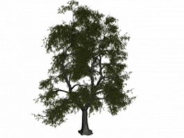 Old lime tree 3d model preview