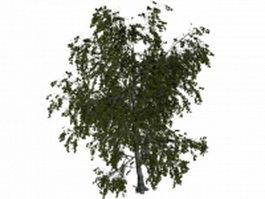 Eurasian aspen tree 3d model preview