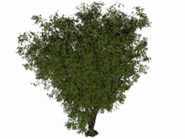 Old apple tree 3d model preview