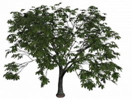 Chinese chestnut tree 3d model preview