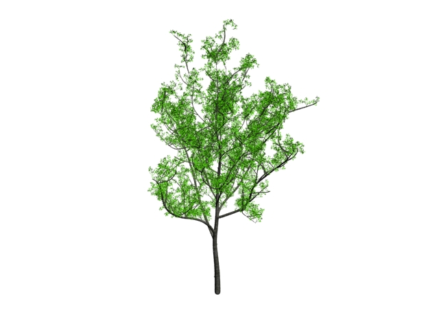 Young hickory tree 3d rendering