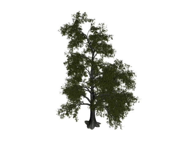 Tilia tomentosa tree 3d rendering