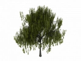 White willow tree 3d model preview