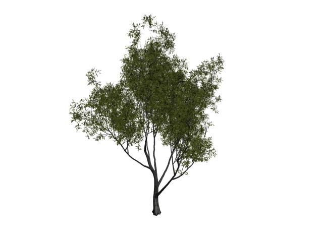 Babylon willow tree 3d rendering