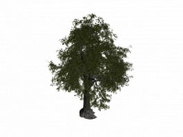 Basswood tree 3d model preview