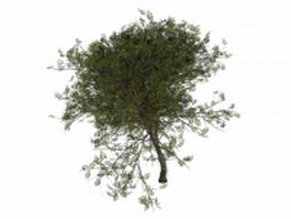 Wild service tree 3d model preview