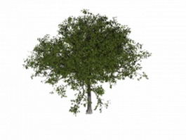Apple tree 3d model preview