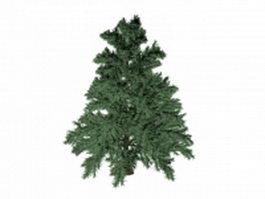 Whitebark pine 3d preview
