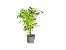 Potted pachira aquatica with braided tree trunk 3d model preview