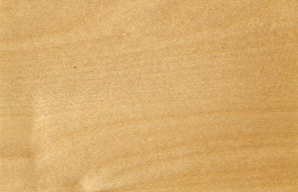 European White Birch Wood Grain Texture Image 15991 On