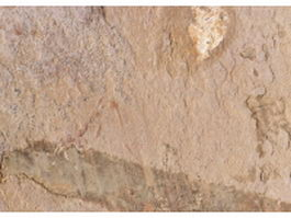 Close-up of rosy brown limestone surface texture
