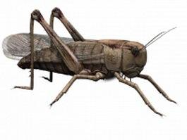 Africa grasshopper 3d preview