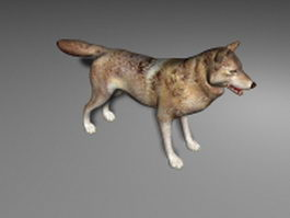 Gray wolf 3d model preview