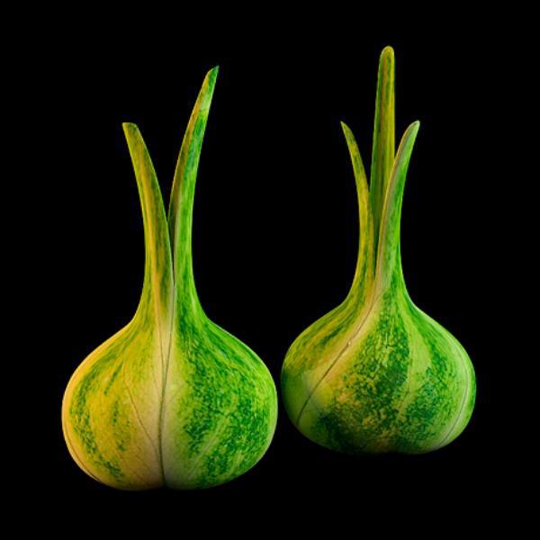 Green garlic vase 3d rendering