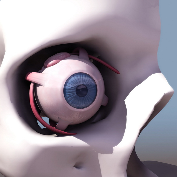 Anatomy of eye 3d rendering