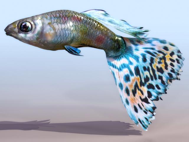 Aquarium fish 3d rendering