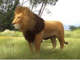 African lion 3d model preview