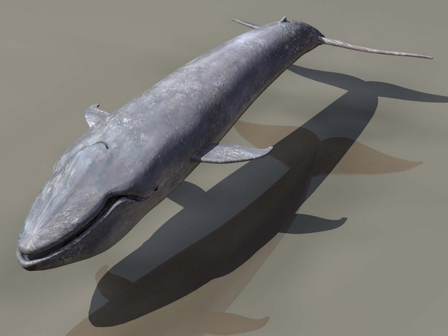 Blue whale 3d rendering