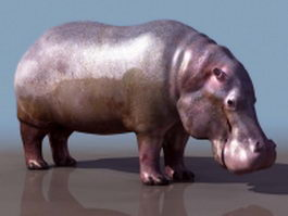Hippopotamus 3d preview