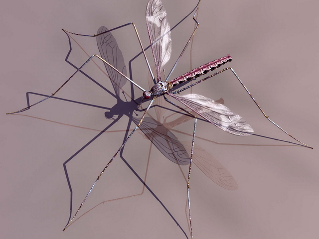 Adult mosquito 3d rendering