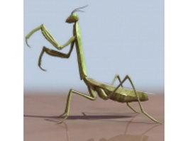 Adult mantis 3d model preview