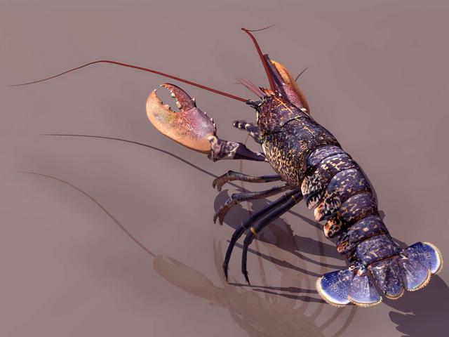 European lobster 3d rendering