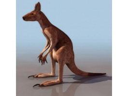 Wild kangaroo 3d preview