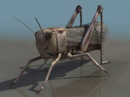 Brown locust 3d model preview