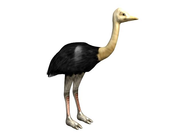 Somali ostrich 3d rendering