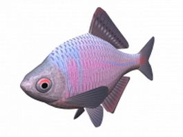 Japanese bitterling fish 3d model preview