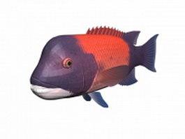 Pacific sheepshead fish 3d model preview