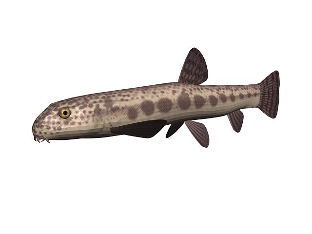 Freshwater fish 3d rendering