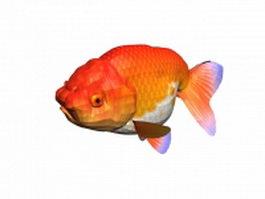 Ranchu goldfish 3d model preview