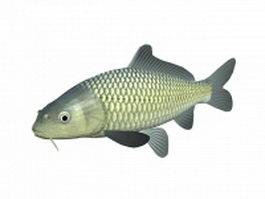 Koi fish 3d preview