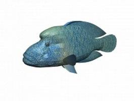 Napoleon fish 3d model preview