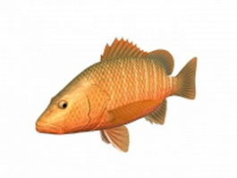 Mangrove red snapper 3d model preview