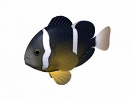 Night sergeant fish 3d model preview