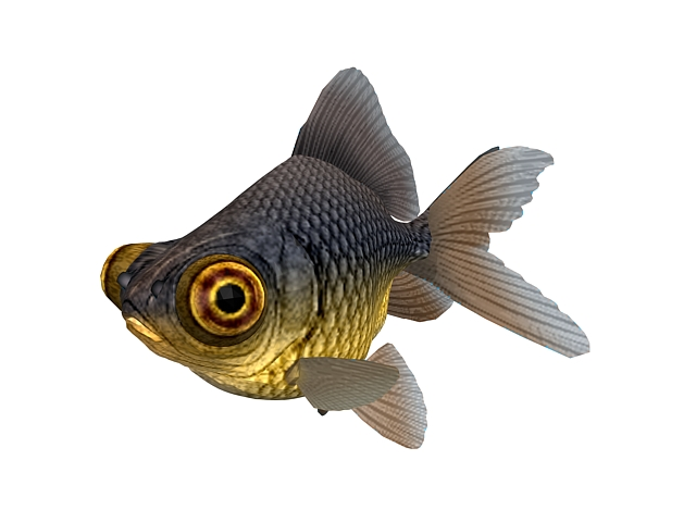 Black moor goldfish 3d rendering