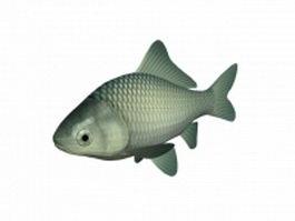 White crucian carp 3d model preview