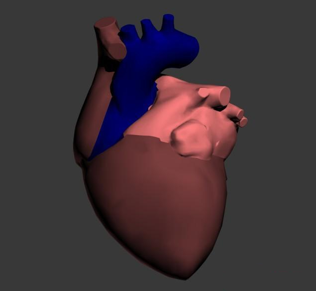 Human heart 3d rendering