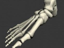 Foot bones anatomy 3d model preview