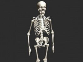 Human skeleton 3d preview