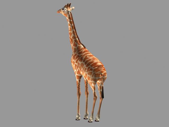 Adult giraffe 3d rendering