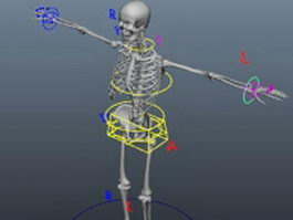 Skeleton rigging 3d preview