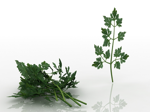 Parsley leaves 3d rendering