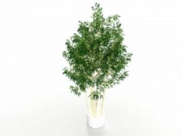 Potted bamboo plants 3d model preview
