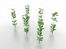 Sapling tree 3d model preview