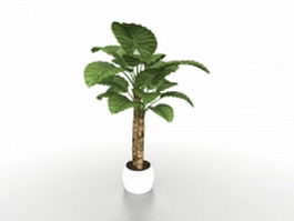 Potted Alocasia Calidora plants 3d model preview