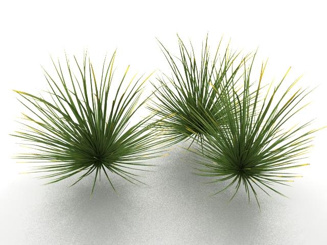 Desert grass 3d rendering