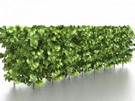 Box hedge plants 3d preview